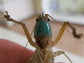 New insect species discovered at The Preserve!